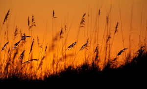sea oats sunrise sgi (2)