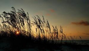 Sunrise sea oats on St. George Island