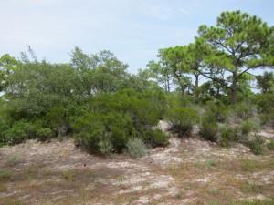 1324 Azalea Drive, Plantation Gulf View lot - $57,900.